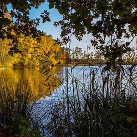 Vennetje in Nationaal Park de Meinweg van Julian Buijzen
