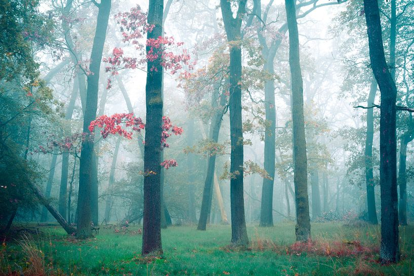 Bos in de mist van Martin Wasilewski