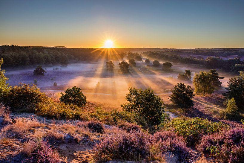 La bruyère en fleur au lever du soleil sur Frans Lemmens