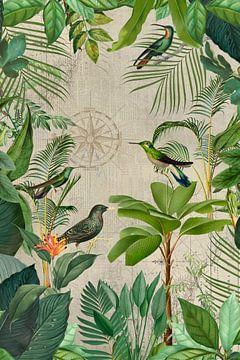Reise Ins Paradies Der Vögel von Andrea Haase