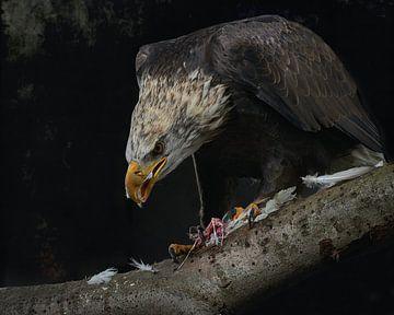 Roofvogel van Mark Kroontje