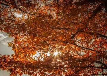 Zonlicht valt  door de bomen op prachtige herfstkleuren van