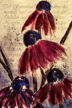 Paarse echinacea -  Echinacea angustifolia van Christine Nöhmeier