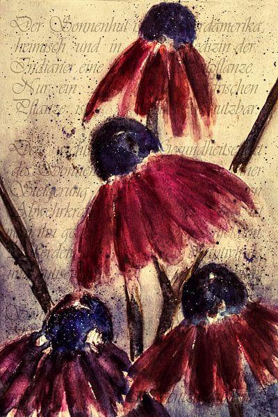 Roter Sonnenhut - Echinacea angustifolia von Christine Nöhmeier