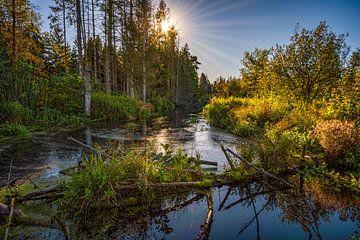 Naturschutzgebiet Wilhelmsdorf von MindScape Photography