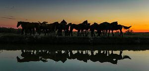 Groep paarden reflectie van