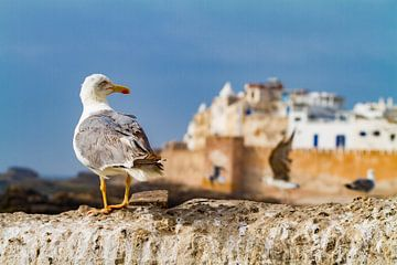 Möwe an der Stadtmauer im Fischerdorf Essaouira von Koen Henderickx