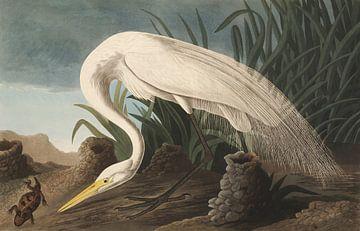 Grote Zilverreiger - Teylers Edition - Birds of America, John James Audubon van Teylers Museum