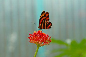 Vlinder van Agnes Meijer