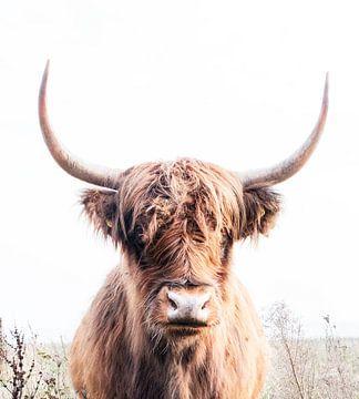 Schotse hooglander 003 van Carola Stroy