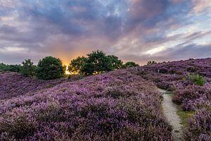 paarse zonsopkomst van