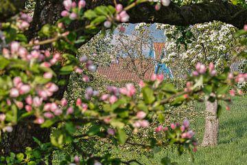 Bloesem in Zuid-Limburg von Wim Roebroek