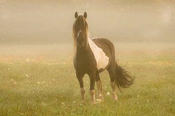 Paard in de dauw sur Dennis Timmer