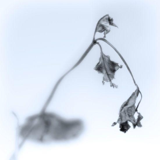 Fading Nature 15 van Pieter van Roijen