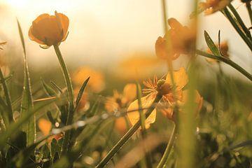 Bloemen in de avondzon sur