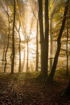Lichtexplosion von Denis Feiner