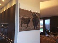 Klantfoto: Schotse hooglanders sepia van Sascha van Dam, op canvas