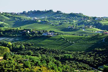 Wijnvelden in Piëmont van Denise van Gerven