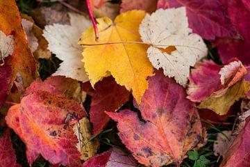 Herfst is een kleuren palet van