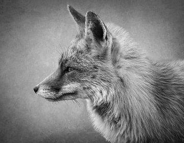 Porträt eines Fuchses in Schwarz und Weiß von Marjolein van Middelkoop