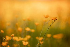 Silky Yellow van Hiske Boon