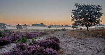 Das Morgenlicht von Monica de Jong