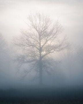 Baum im Nebel von Jeroen Linnenkamp