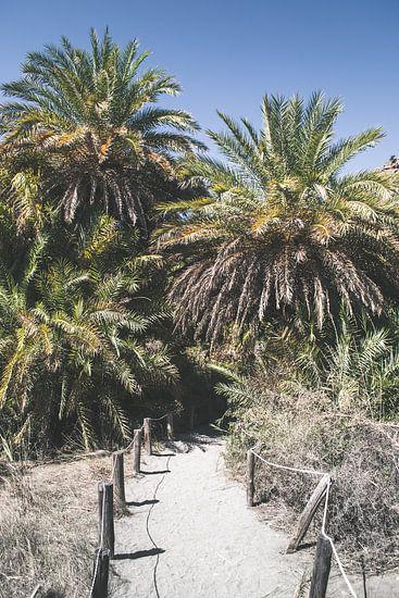 Wandelpad naar het Palmbos