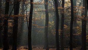 Silhouetten in herfst kleuren van P Leydekkers - van Impelen