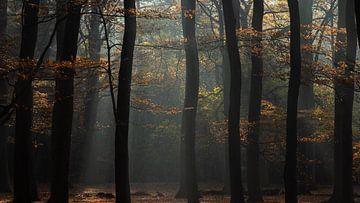 Silhouetten in Herbstfarben von P Leydekkers - van Impelen