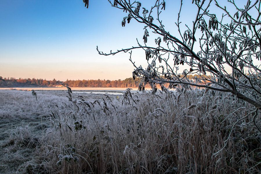 Winters plaatje van Dick Hooijschuur