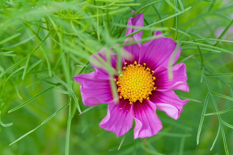 Paarse bloem van Tamara Witjes