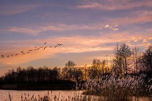 Zonsondergang met vogels. van