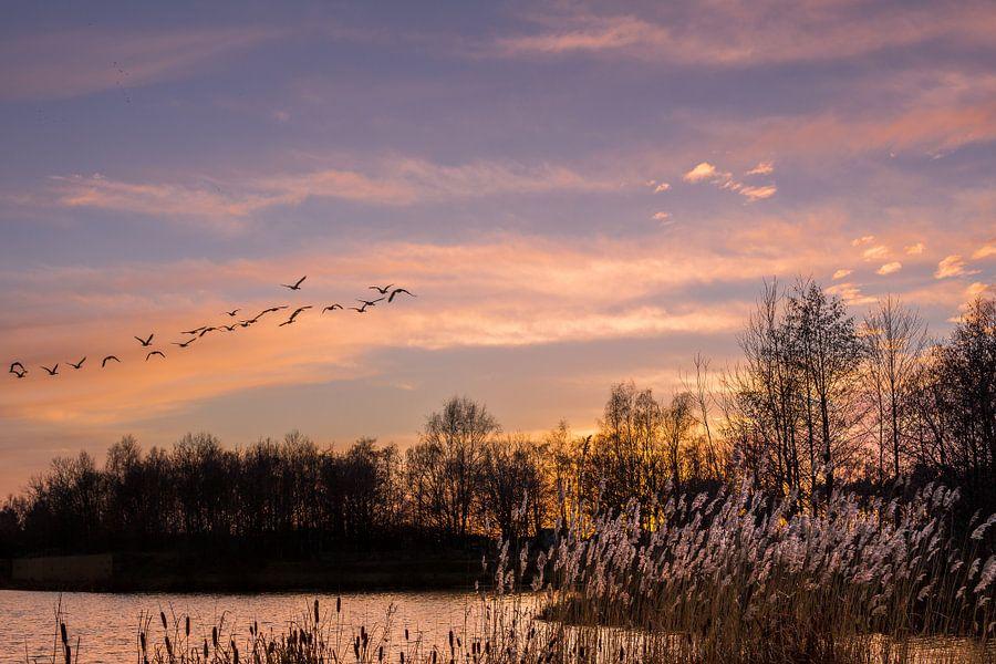 Zonsondergang met vogels. van Hennnie Keeris