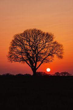 Einsamer Baum bei Sonnenuntergang von Jeroen Brasz