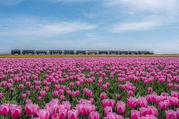 Museumstoomtram Medemblik-Hoorn Noord-Holland sur Moetwil en van Dijk - Fotografie