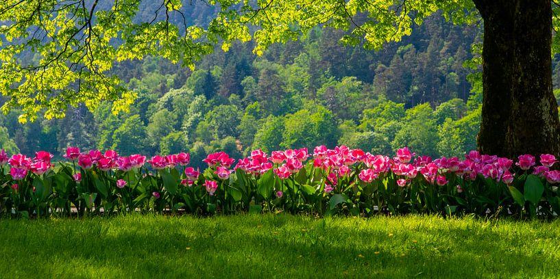 Roze tulpen in het groen van Maike Scheepstra