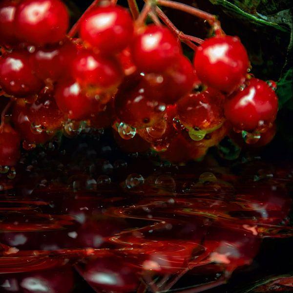 sparkling drops  - Rote Grütze von Christine Nöhmeier