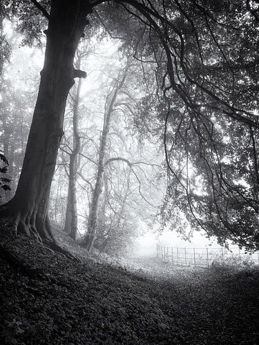 Bospad in de mist van