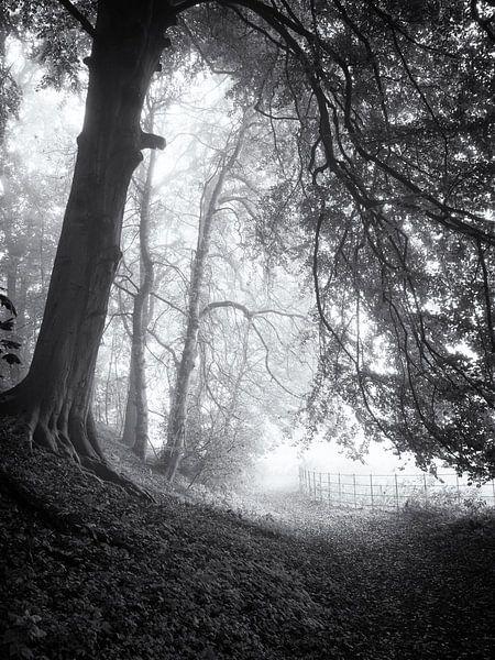Bospad in de mist van Paul Beentjes