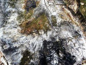 TreeScape 11 van MoArt (Maurice Heuts)