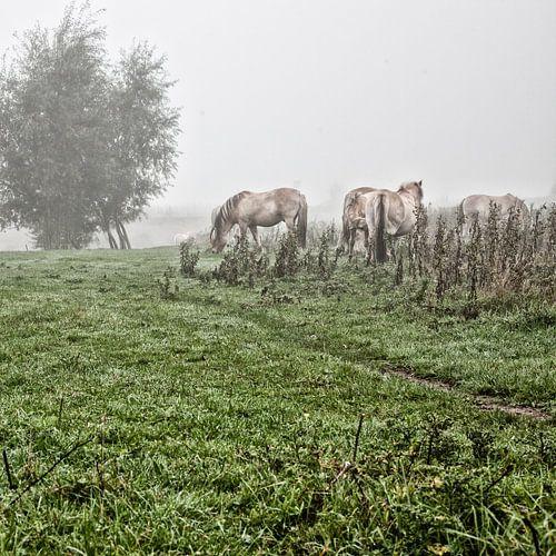 Paarden in de mist: Mystic horses (nr. 6 van 8)