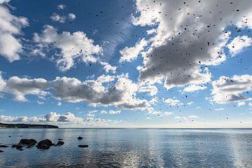 Schwalben am Himmel, Naturstrand Lobbe von GH Foto & Artdesign
