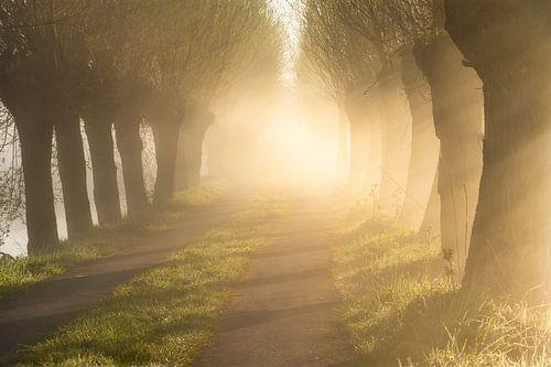 Mistige bomenlaan met warm licht