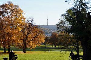 Walk in autumnal park