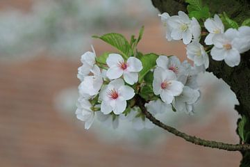 Bloesem (Blossom)  von Ab Donker