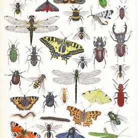 Insects van Jasper de Ruiter