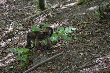 Affen Baby von Susanne Seidel