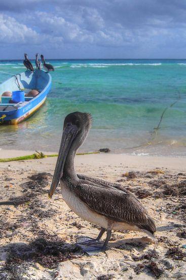Pelicans van BL Photography