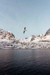Vogel in Fjord, Noorwegen | Landschapsfotografie Lofoten | Fotoprint natuur sneeuw